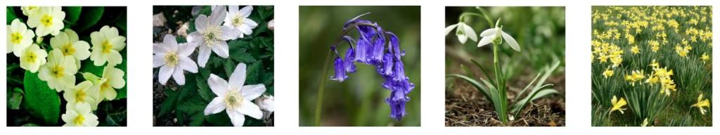wildflowers image-cropped jpeg