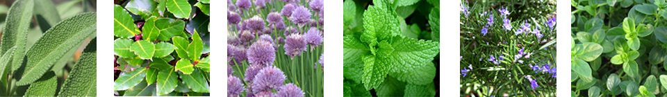 Herbs – grow your own 'great flavour enhancers'